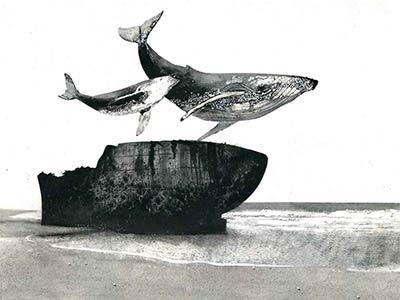 Cetacea 2. L'incantatore di balene